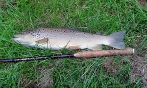 River Granta trout - John Reynolds