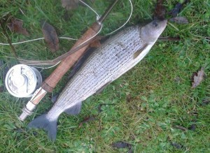 River Test Grayling